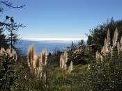 Hiking View in Big Sur - CA